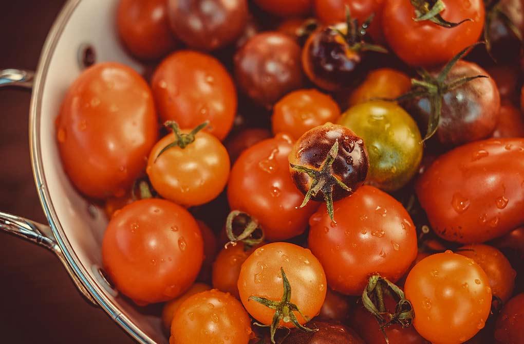 ehpad cuisine eco responsable